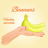 Bananas   in the palm of healthy nutrition vector Royalty Free Stock Photo