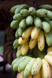 Bananas Or Plantains Royalty Free Stock Images
