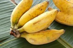 Bananas. Royalty Free Stock Images