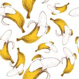 Bananas seamless pattern. Hand drawn sketch style ripe tropic fruits vector illustration. Ideal for party designs, fruit markets. And  vegan menu Royalty Free Stock Photos