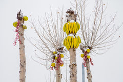 Bananas with snow on the trees Royalty Free Stock Images