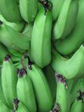 Bananas verdes foto de stock royalty free