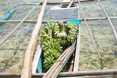Bananas verdes Fotografia de Stock
