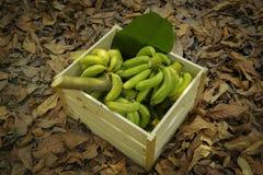 Bananas verdes nas caixas de madeira Foto de Stock