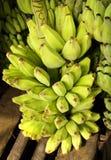 Bananas verdes, Yangon, Myanmar Imagens de Stock