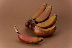 Bananas vermelhas Foto de Stock Royalty Free