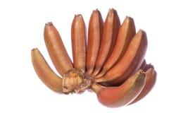 Bananas vermelhas isoladas Imagem de Stock Royalty Free