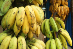 Very tasty bananas from Sri Lanka Royalty Free Stock Image