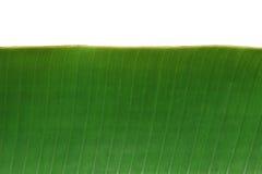 bananblad Royaltyfria Bilder
