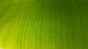 bananblad Royaltyfria Foton