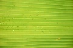 bananblad Royaltyfri Foto