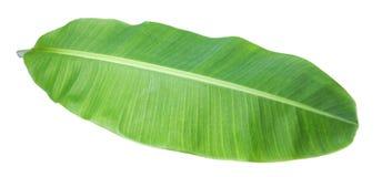 bananblad Isolerat på vitbakgrund med den snabba banan arkivfoton