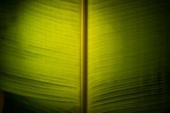 Bananblad med ljus Arkivbilder