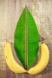 Bananblad och frukt Arkivfoto