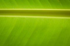 Bananbladbakgrund Royaltyfri Foto