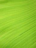 Bananbladbakgrund Arkivfoton