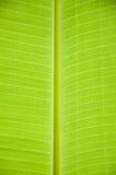 Bananbladbakgrund Arkivbilder