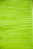 Bananbladbakgrund Royaltyfria Foton