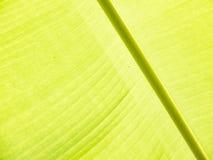 Bananbladdetalj Royaltyfria Foton