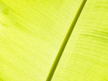 Bananbladdetalj Arkivbild