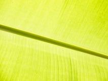 Bananbladdetalj Arkivfoton