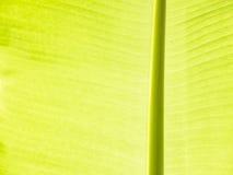 Bananbladdetalj Royaltyfri Fotografi