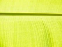 Bananbladdetalj Royaltyfri Foto