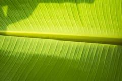 Bananbladtextur Arkivbilder