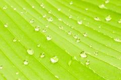 Bananbladtextur med vattendroppar Royaltyfri Fotografi