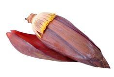 bananblomma Royaltyfri Bild