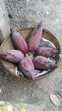 Bananblomning i bambukorg Royaltyfri Foto