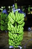 Banane Immagini Stock