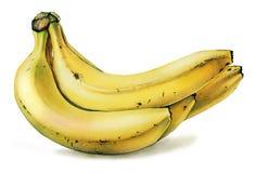 Banane Fotografia Stock Libera da Diritti