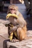 Banane-Affe Stockbild