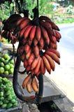 Banane asiatique rouge Photo stock