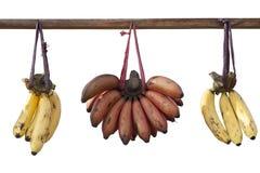 Banane che appendono sul ceppo Immagini Stock