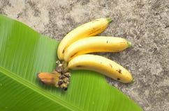 Banane con la foglia della banana Immagini Stock
