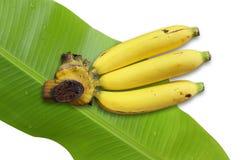 Banane con la foglia della banana Fotografia Stock Libera da Diritti