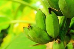 Banane crue Photo libre de droits