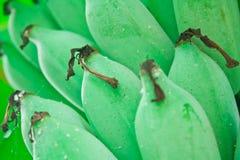 Banane cultivée Image libre de droits