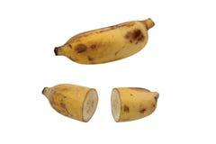 Banane cultivée Photographie stock libre de droits