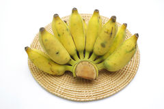 Banane cultivée Image stock