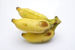 Banane cultivée Photographie stock