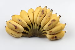 Banane cultivée Photos stock