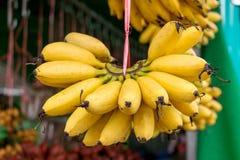Banane d'or Photographie stock libre de droits