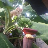 Banane d'amour de chat Photographie stock libre de droits