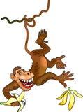 Banane de coup de singe Images stock