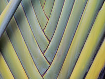 Banane de feuille de modèle Image stock