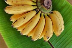 Banane de Latundan Image stock