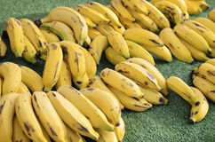 Banane di Cuba Fotografia Stock Libera da Diritti